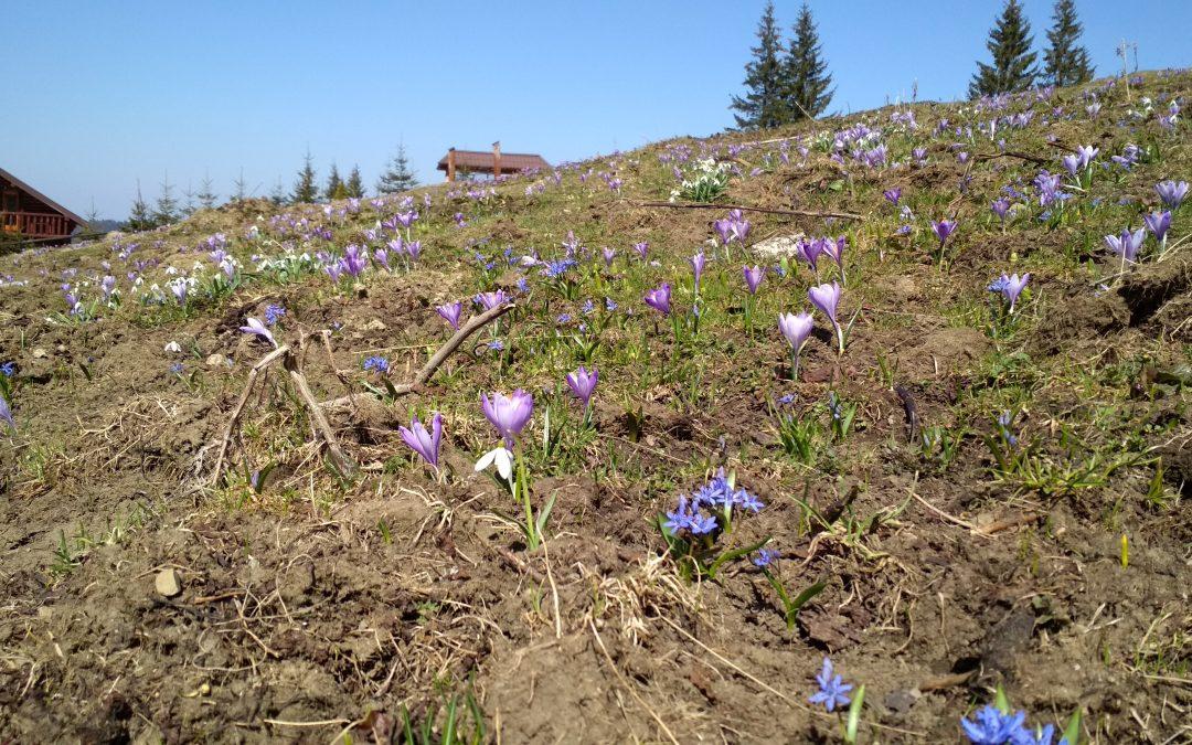 Primăvara şi drumeţiile montane